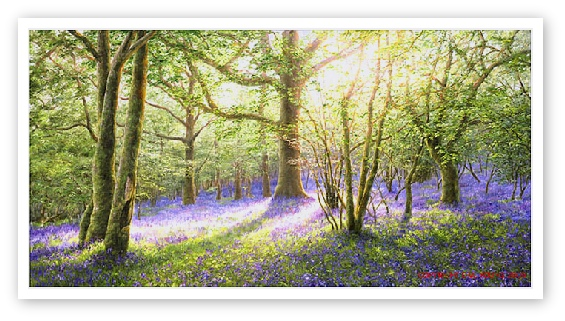 bluebell woods meldon dartmoor painting artist  david young
